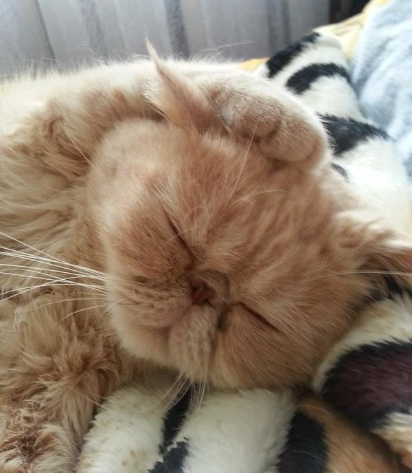 Сладкий сон сон, кот, Учеба, длиннопост