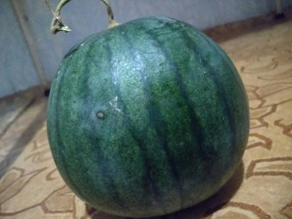Хороший урожай арбуз, урожай, сельское хозяйство, длиннопост
