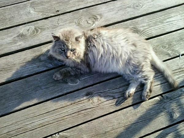 Мой друг. кот, друг, длиннопост