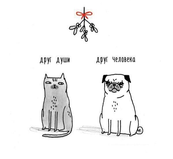 Кот и собакен