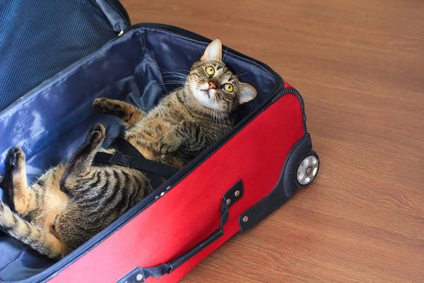 Четверть россиян готова отменить путешествие ради котов путешествия, кот