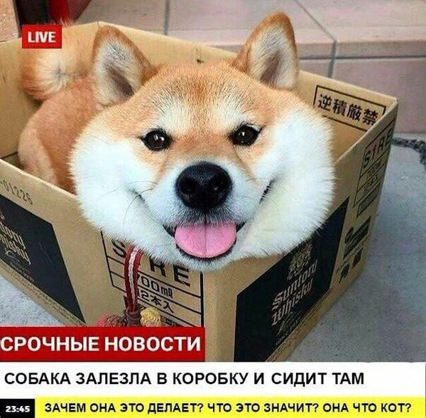 Срочные новости! Собака, новости, юмор