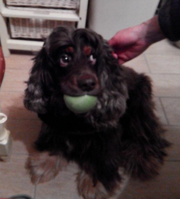 Моя собака ворует яблоки, но виноватой себе не считает, а считает, что ее можно уже и отпустить.
