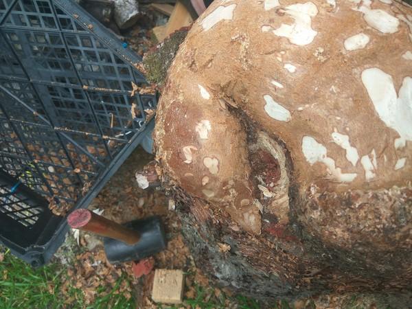 Уточка резьба по дереву, сувель, утка, длиннопост