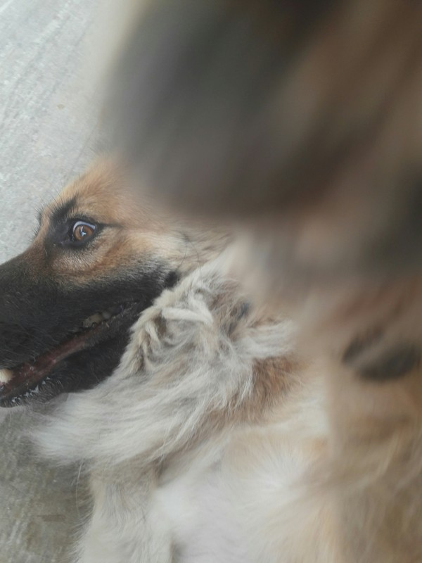 Безумие Собака, улыбка, лапа, безумие, длиннопост