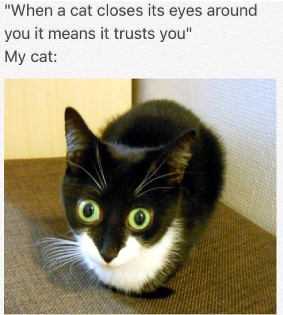 """""""Когда кот закрывает свои глаза рядом с вами это значит он вам доверяет.""""Мой кот:"""