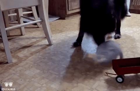 Ужасное дтп с кошкой и собакой