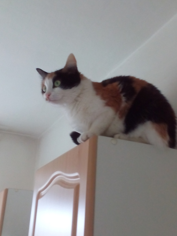 Кот Ёж кот, отдам в хорошие руки, Недосфинкс, Челябинск, длиннопост