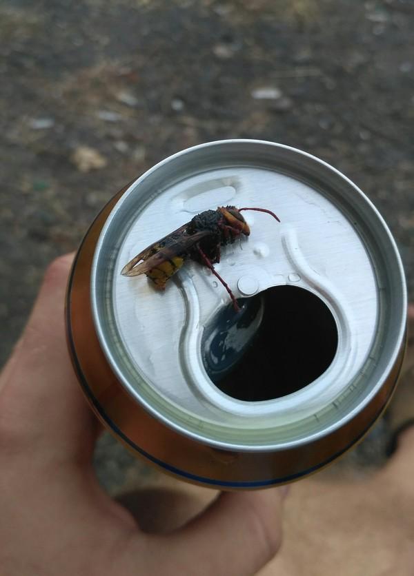 Закуска к пиву от производителя. пиво, закуска, шершень, заботливый, производитель, длиннопост