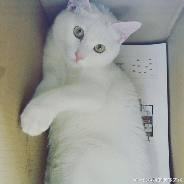 Эти милые существа Кот, Weibo, Instagram, Милота, Длиннопост