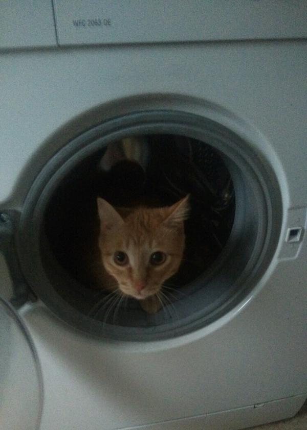 Мой кот кот, моё, фотография, длиннопост