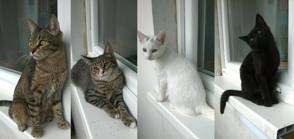 Срочно ищем хозяев для котят! в добрые руки, кот, зоопомощь, зеленоград, животные, домашние животные
