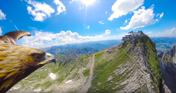 Альпы глазами орла Альпы, горы, Видео, красота