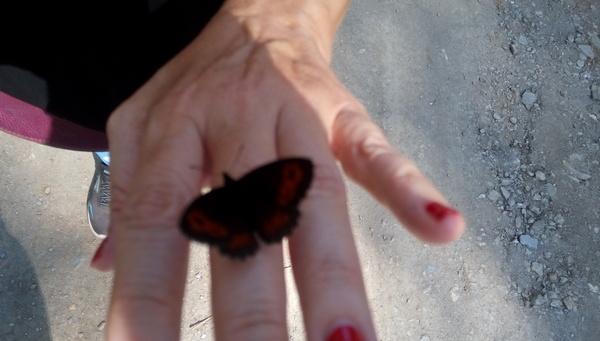 Когда начинаешь верить... суеверия, Мама, бабочка, смерть, текст, из интернета