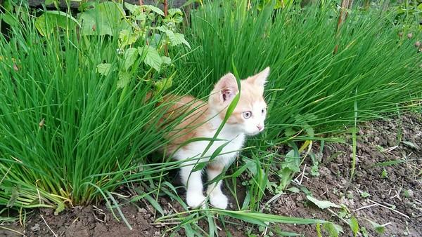 На охоте. кот, рыжик, охота