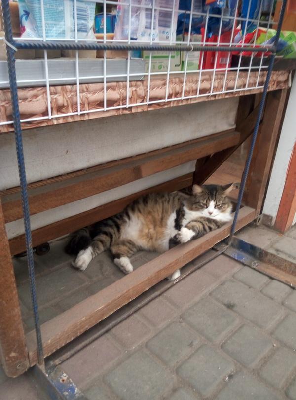 Котик кот, толстый