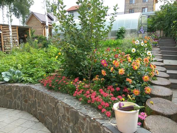 Немного (нет) цветов вам в ленту. цветы, бабушка, красота, лето, Сибирь, хобби, длиннопост