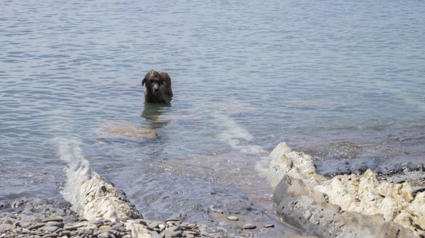 Последняя поездка на море перед очередным переездом. Собака, соре, лето, пляж, закат, борзая, шелти, ирландский волкодав, длиннопост