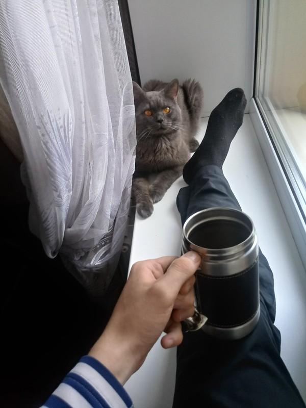 Доброе утро! кот, утро, кофе, длиннопост