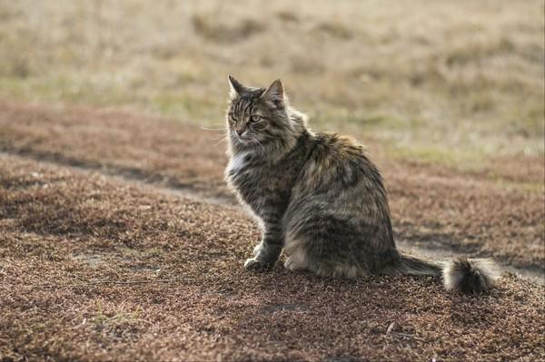 Дуся, деревенская кошка