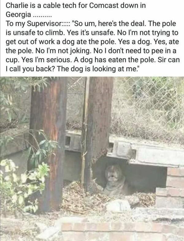 Сложное положение фотография, Собака, Столб, текст на картиночке