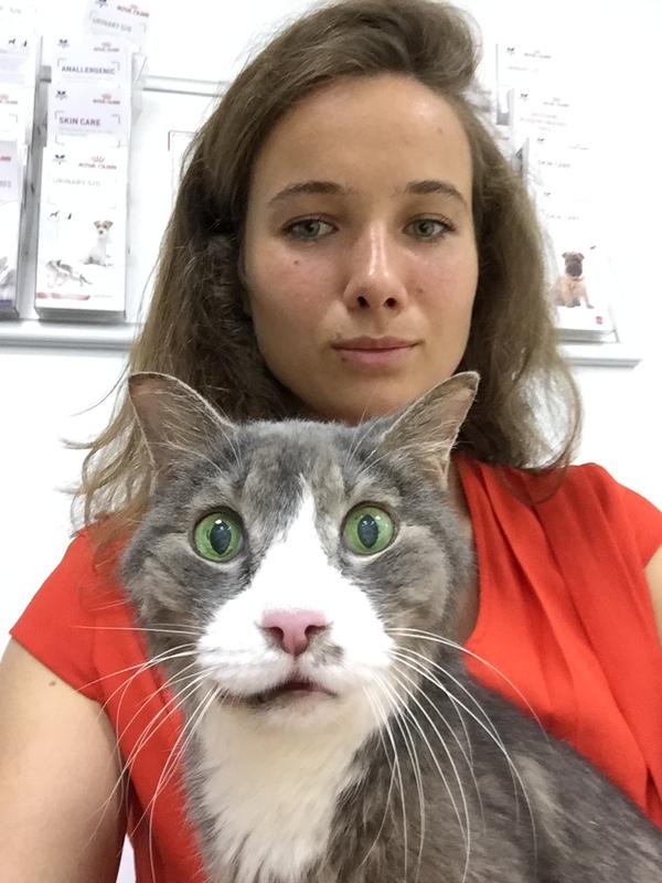 Обманутых ожиданий взгляд моё, кот, фотография, ветеринар