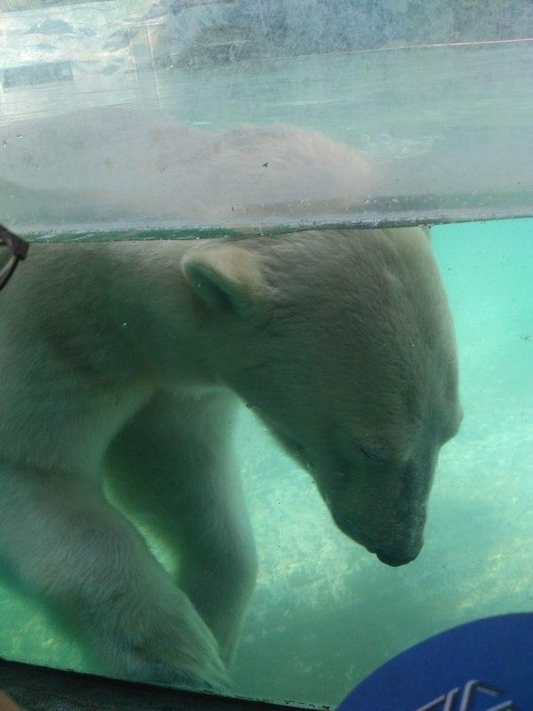 Скажи привет! зоопарк, венгрия, Животные, длиннопост