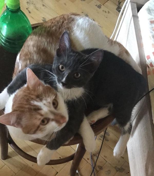Кошачья дружба кот, дружба, обнимашки