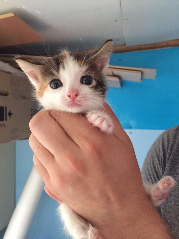 4 маленьких котёнка ищут новый дом . кот, в добрые руки, длиннопост, помощь животным