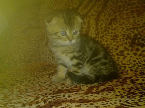 """И под конец волны """"Было-стало"""" кот, шерстяной мешок, черно-белое, вырос, котлета, длиннопост, моё"""