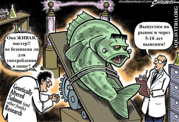 Генномодифицированный лосось линии AquAdvantage наука, новости, генетика, ГМО, сёмга