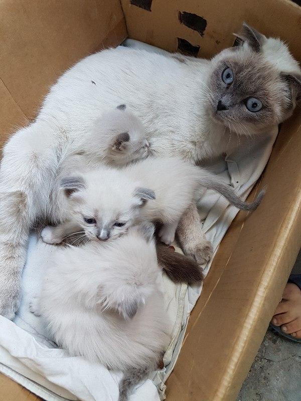 Мы тут котят раздаем Кот, Хэштег, Длиннопост, Костанай, В добрые руки, Помощь животным