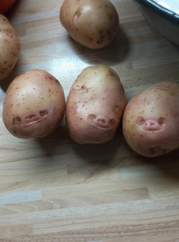 Первые две картошины рассмешили, а третья уже заставила задуматься..