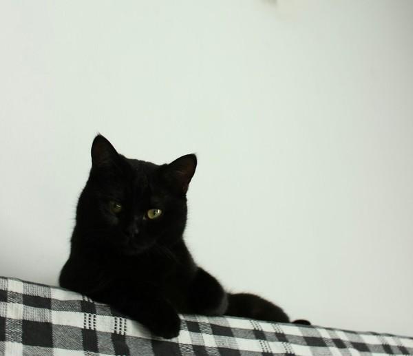 Отдам кота в хорошие руки, г. Новосибирск кот, новосибирск, отдам в хорошие руки, длиннопост