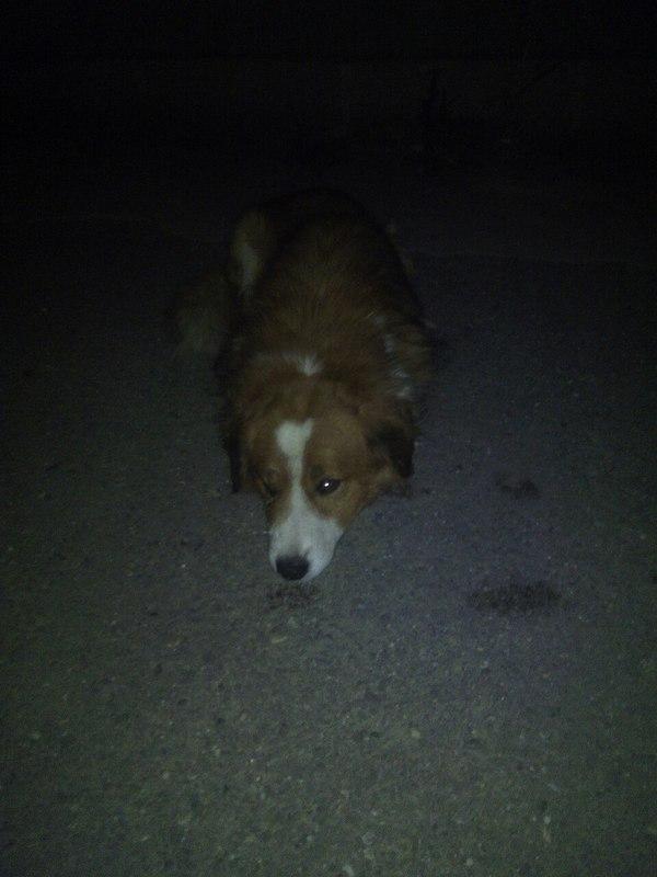 Иркутск, возможно кто то опознает свою собаку! Иркутск, потеря, Животные, Собака, длиннопост