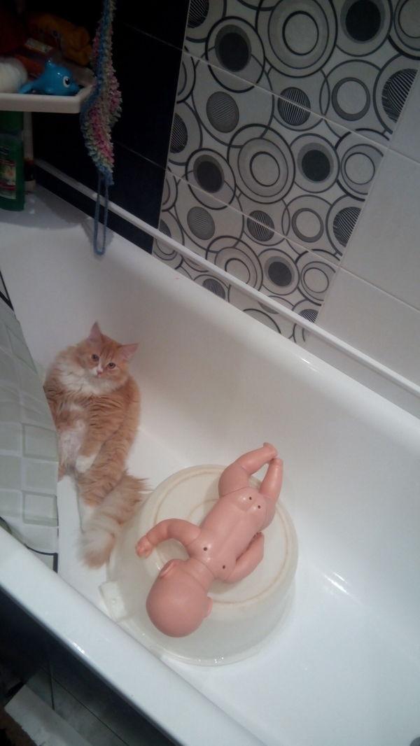Я не знаю что он делал с куклой, но выглядит уставшим. Кот, Ванна, Кукла, Длиннопост