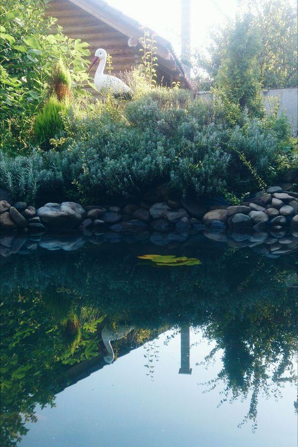 Райский уголок в моем саду