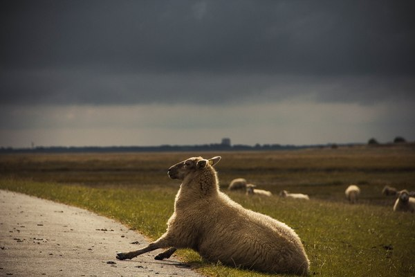 Перед бурей Германия, фотография, овцы, маяк