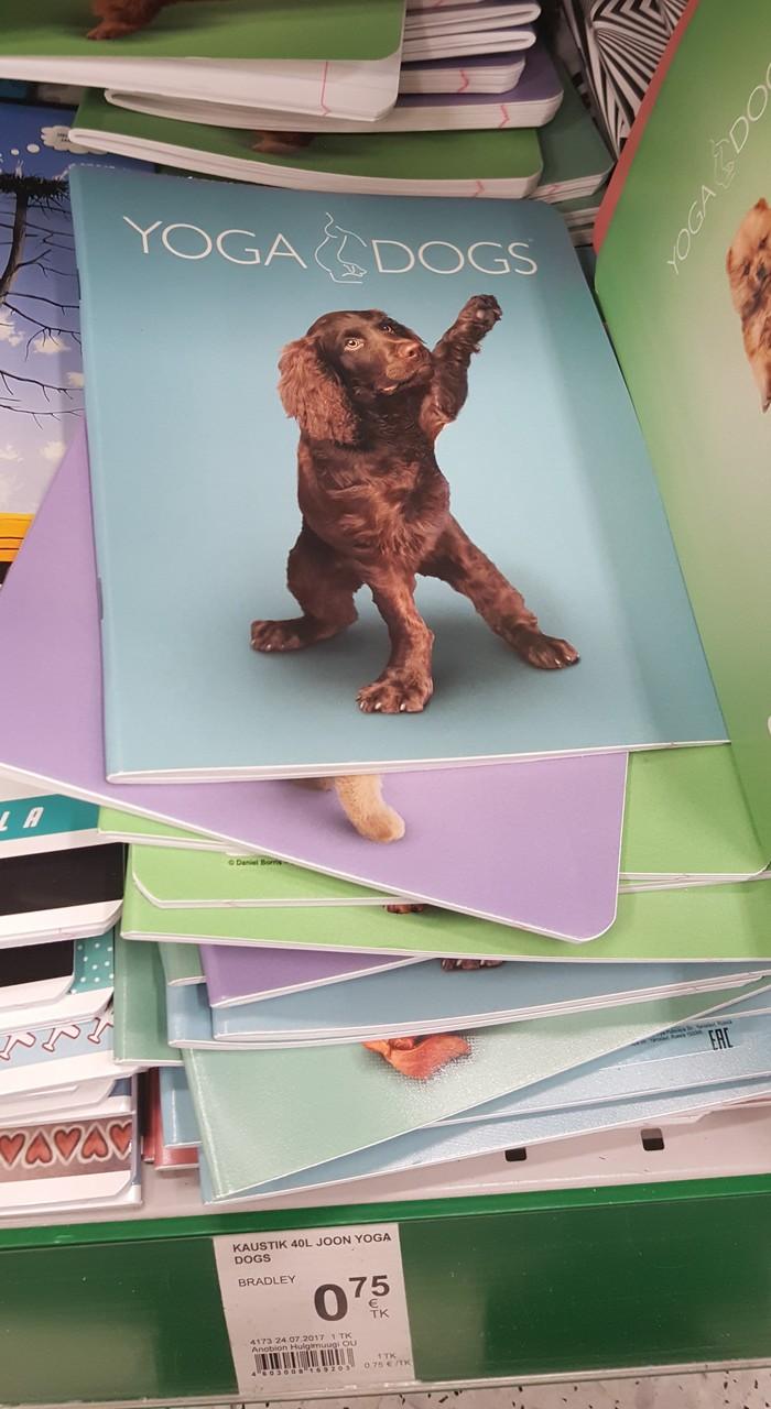 Hail dog! Собака, Канцелярия, Зига