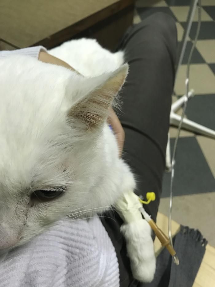 Диета почечная недостаточность у кошек