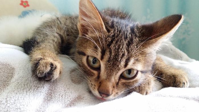Одним котом на помойках стало меньше Кот, Домашний котик