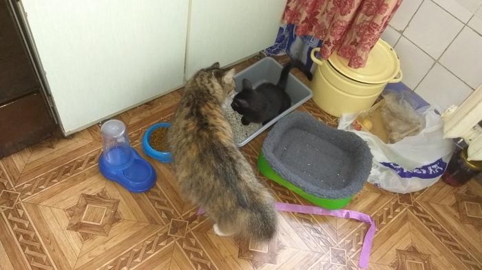 Прошу совета. Кошка и котёнок, Взаимоотношения, Длиннопост, Кот, Помощь, Помощь животным