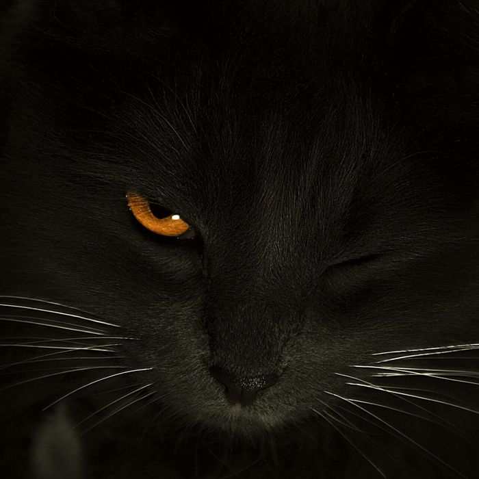 Кошка...и снова темное фото. Моё, Хочу критики, Кот, Фотография, Подмигивание