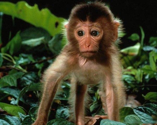 Сексуальный опыт с обезьяной