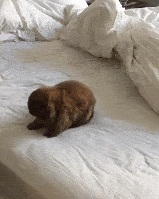 Тёплая кроватка.