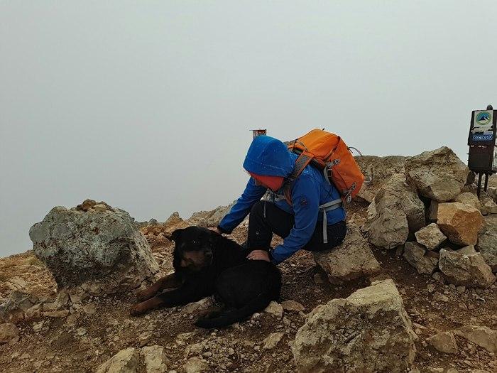 Неожиданный попутчик Собака, Суперпёс, Попутчики, Хороший мальчик, Горы, Царь горы, Черногория, Длиннопост