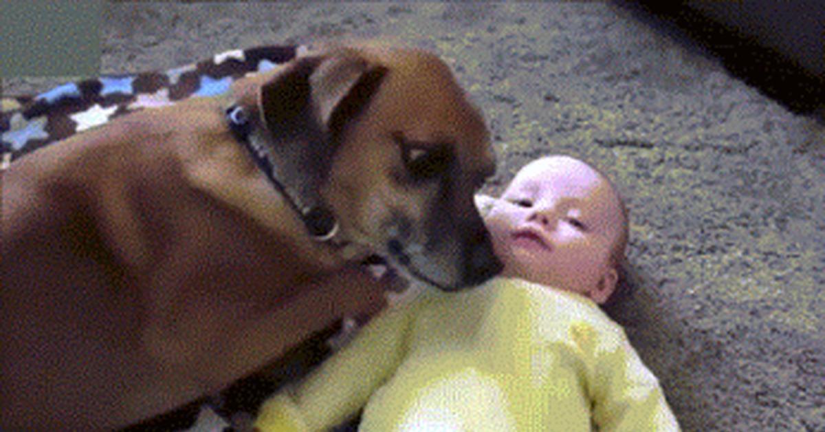 Смешные гифки животные и люди