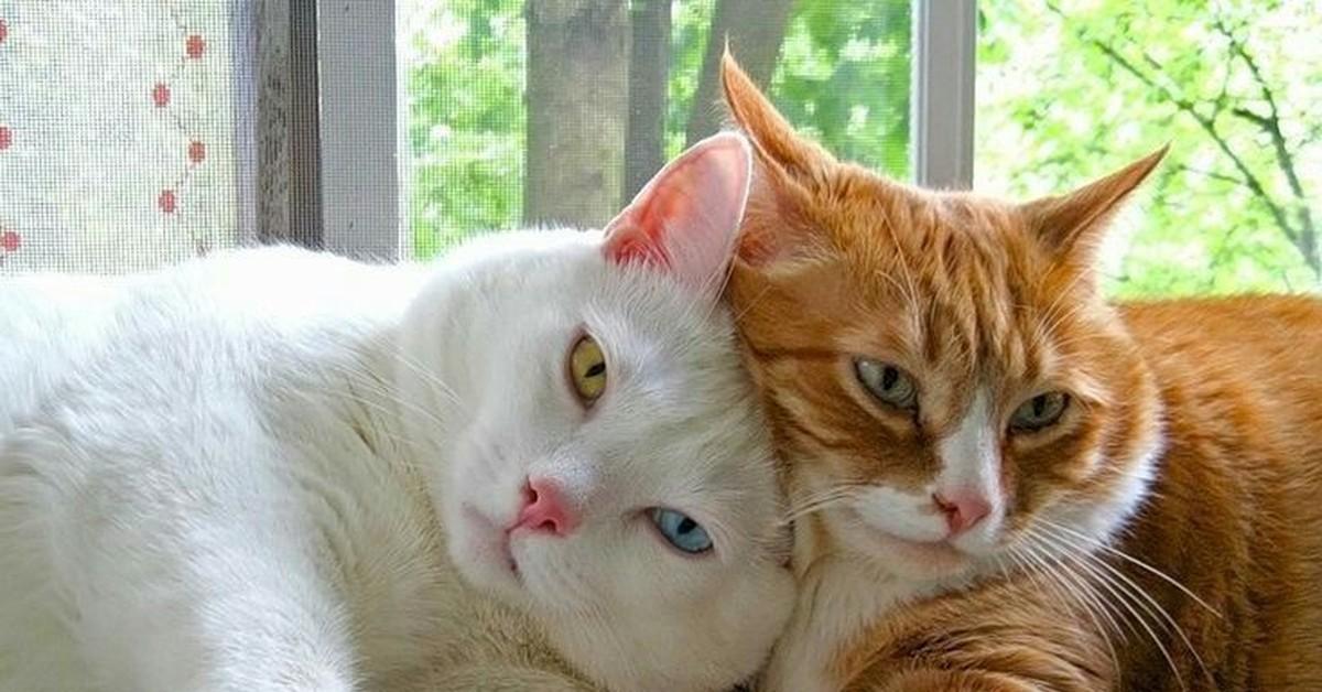 картинки где котики дружат того, новые схемы