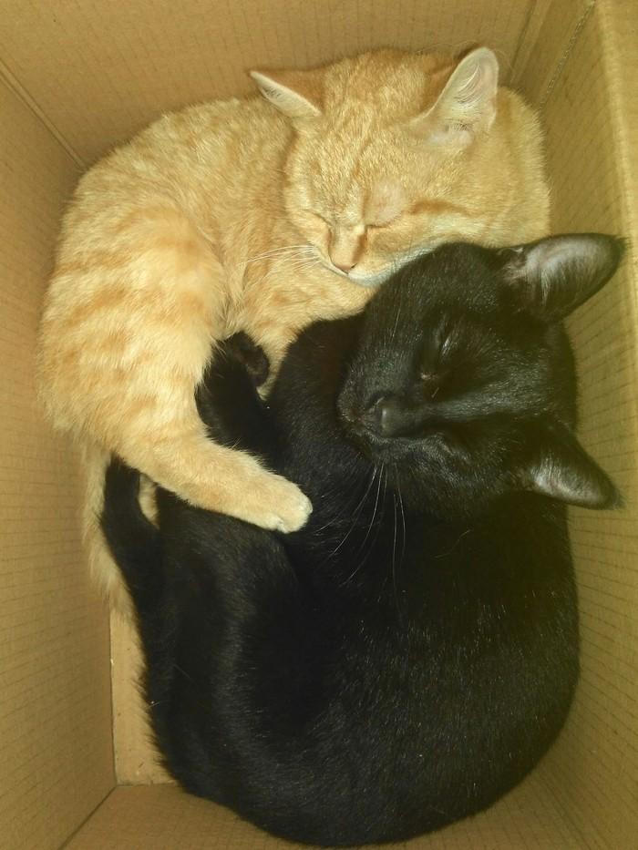 Котики и их домик Котомафия, Друзья, В домике, Ловушка для кота, Длиннопост, Кот