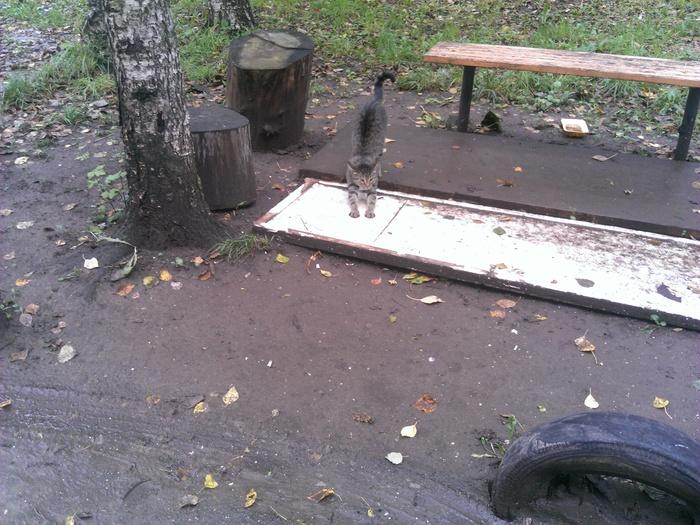 Уличные потягушки Кот, Тянем-Потянем, Уличная жизнь